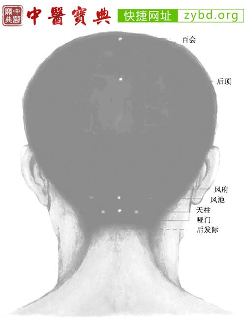 头部背面穴位图